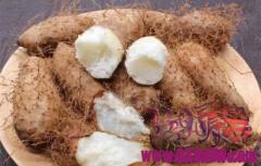 毛薯叶子是治疗口腔溃疡的良药,根部,是顶级美食