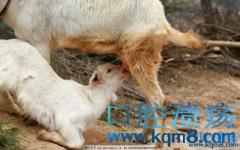 羊奶含有上皮细胞生长因子(EGF)可以促进口腔溃疡愈合