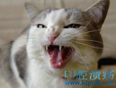 猫口腔溃疡发病原因、症状、治疗方法