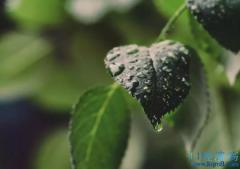 藿朴夏苓汤组成方歌功效与作用:解表化湿为主、兼燥湿利水,祛湿清热