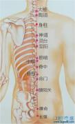 身柱穴的准确位置图功效与作用:补气壮阳,主治咳嗽,气喘,疔疮发背