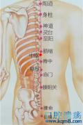 中枢穴的准确位置图功效与作用:健脾利湿、清热止痛,治疗呕吐,腹满,胃痛,食欲不振,腰背痛