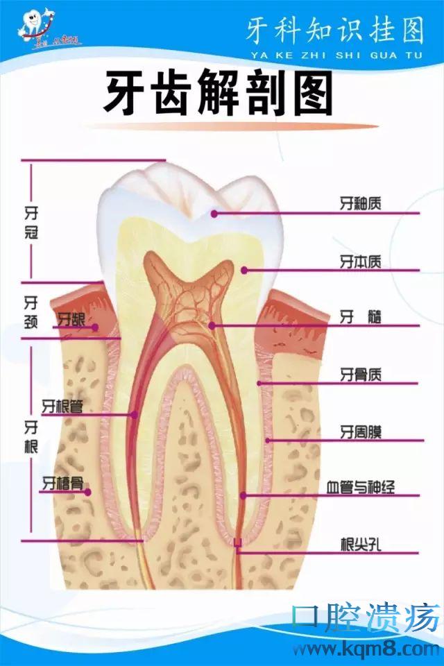 同一个医生做的假牙,为什么效果就不一样?