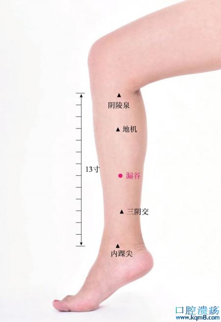 漏谷穴准确位置图功效与作用:健脾化湿、理气宣痹